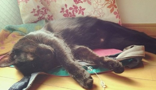 猫が慢性腎不全から回復することはある?治療や経過について!