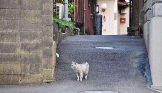 鳥取県でペット救急に対応!夜間の診療可能な動物病院!