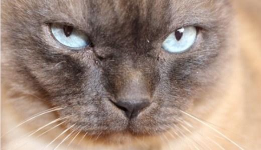 猫が唸る、怒るときに考えられる原因や理由と対処法とは?