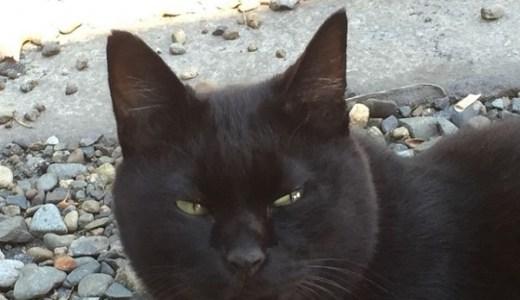 英官邸の新入り猫グラッドストーンは凄腕のハンターだった?