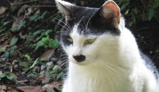 猫エイズの急性期~無症状キャリア~発症までの期間や余命は?