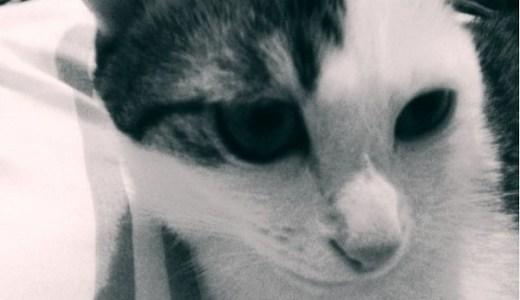 猫の輸血の方法や効果、副作用などのリスクや料金について!