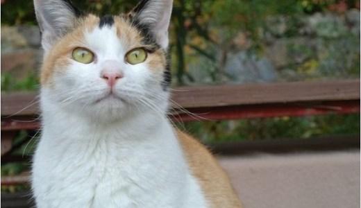 保護猫の慣らし方は?夜鳴きや外に出たがる,なつかない時など!