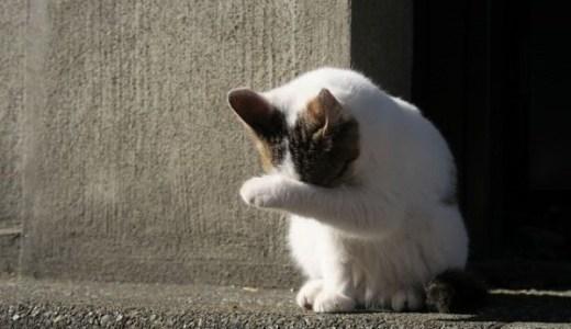 猫が目を痒がる,掻く,こするなどで考えられる原因や病気は?