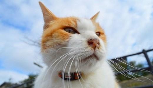 猫の鼻の傷,怪我,かさぶたが治らない!腫瘍(がん)の可能性も?