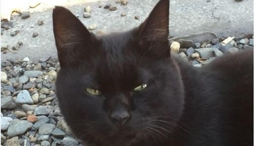 多治見警察署の猫のお巡りさん達のお仕事とは?名前や年齢は?