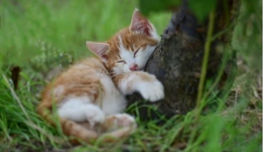 保護猫の病気や必要な検査など動物病院でかかる費用は?