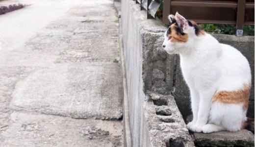 日本人の猫好きな歴史や理由とは?海外の反応は?