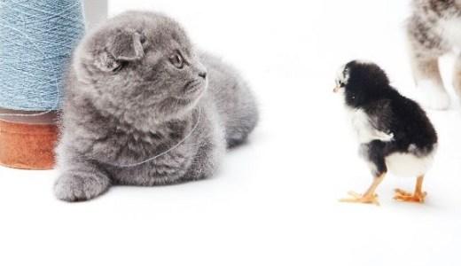 猫とフクロウの同居は可能?猛禽類と肉食ハンターの生態とは?