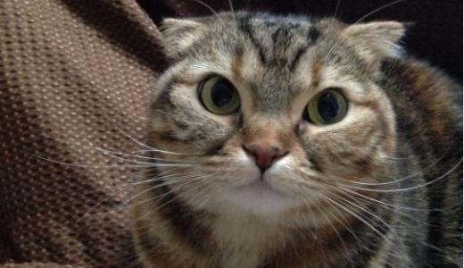 猫の腎不全治療の薬!ラプロスの効果や副作用、価格など!