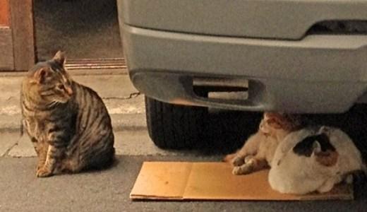 猫の日は谷中で!カフェやグルメ,グッズに人力車まで猫付き!