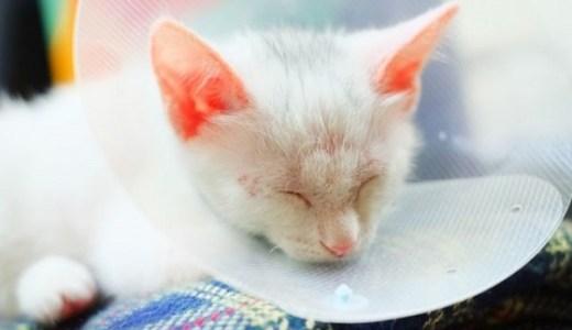 猫のエリザベスカラー装着!食事や寝るときにはどうすれば?