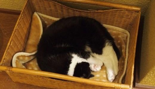 猫の乳がん末期の症状や治療、余命や安楽死の選択について!