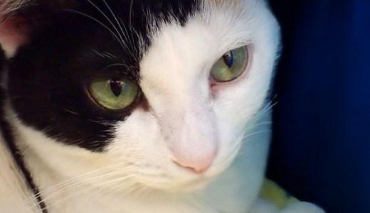 猫の急性腎不全の原因や症状、治療や入院などの費用は?