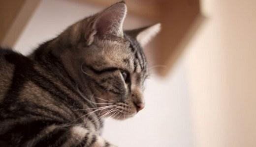 猫の口内炎にインターフェロンの効果や費用は?副作用はある?