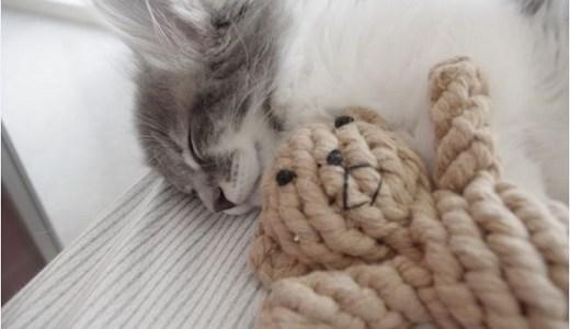 夜間・救急対応の動物病院を受診するときの注意点!