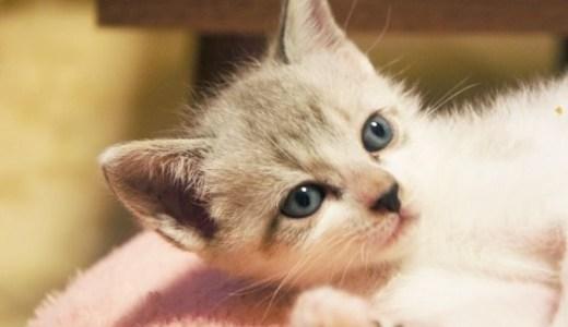 猫の検便でわかることは?採取法や必要量、費用なども!