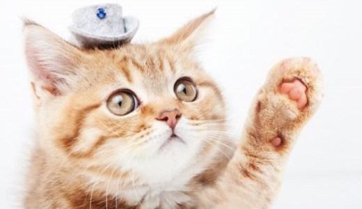 猫と人間の主従関係から考察する下僕たちの進化と歴史とは?
