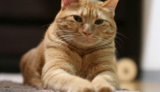 猫にプロポリス!効果が期待できる病気と効能や副作用について!