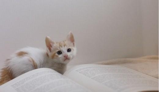 猫の不安行動やそのサインとは?原因や対処法について!