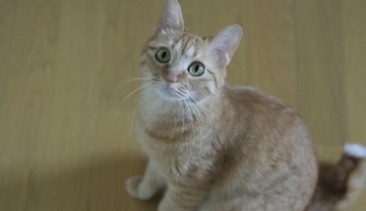 猫の便秘にラキソベロンやラクツロースの効果や副作用など!