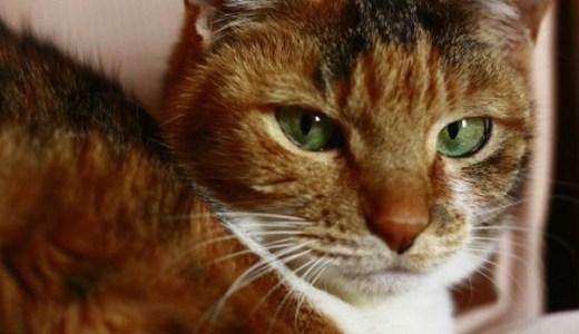 口内炎の猫の食事や強制給餌の方法!痛みによる食欲不振に!