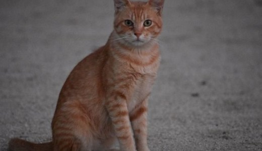 猫の突然死(急死)!心筋症や甲状腺機能亢進症、腎不全の場合!