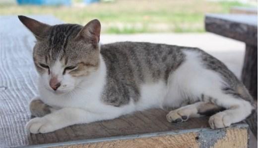 猫のマイクロチップ!安全性(痛みや副作用)と入れる場所や方法!