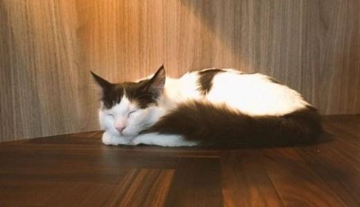 猫の膀胱炎!再発を繰り返す原因や対処法について!