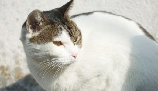 猫や犬から感染?コリネバクテリウム・ウルセランスの予防法!