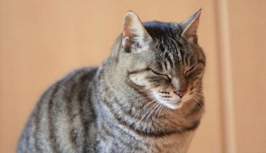 猫の腎不全と脱毛の関連性!他の病気との見分け方や対処法など!
