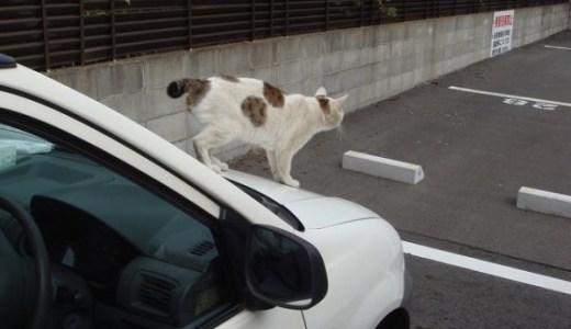 【家に猫がいます】車用ステッカーは愛情と遊び心満載にゃっ!