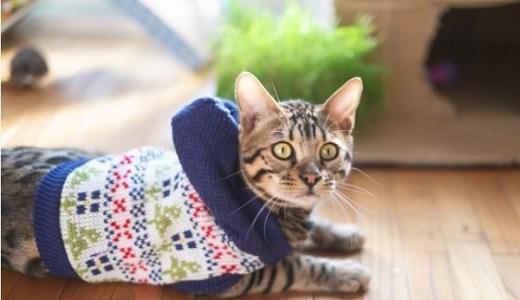 猫の慢性腎不全の冬の管理について!体調の変化や注意点など!