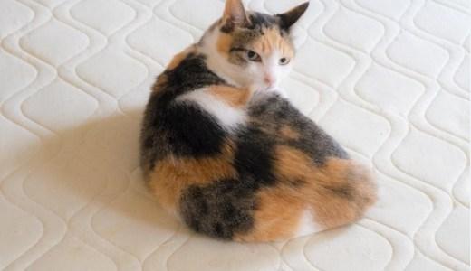 猫の腎不全にプラセンタは効果ある?サプリの選び方など!