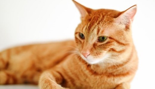 猫のお腹が鳴るのは病気の可能性も?原因や注意点など!