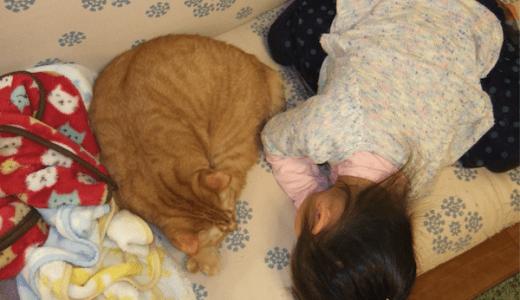 猫の性格は飼い主に似るのか?人の行動が与える影響とは?
