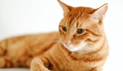 猫の腎不全のサポート&膀胱炎の予防にオススメの無添加サプリ!