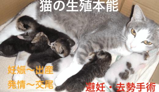 猫の生殖本能!発情〜交尾と妊娠〜出産、不妊手術について!