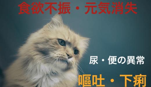猫の食欲不振や、嘔吐や下痢、尿の異常で考えられる原因や病気!
