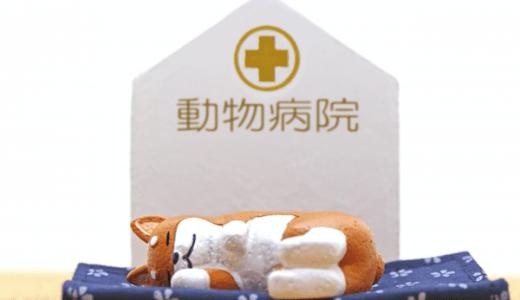 【立川市】ペットの救急時、夜間診療が可能な動物病院