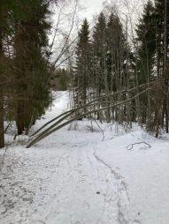 Fler träd över vägen
