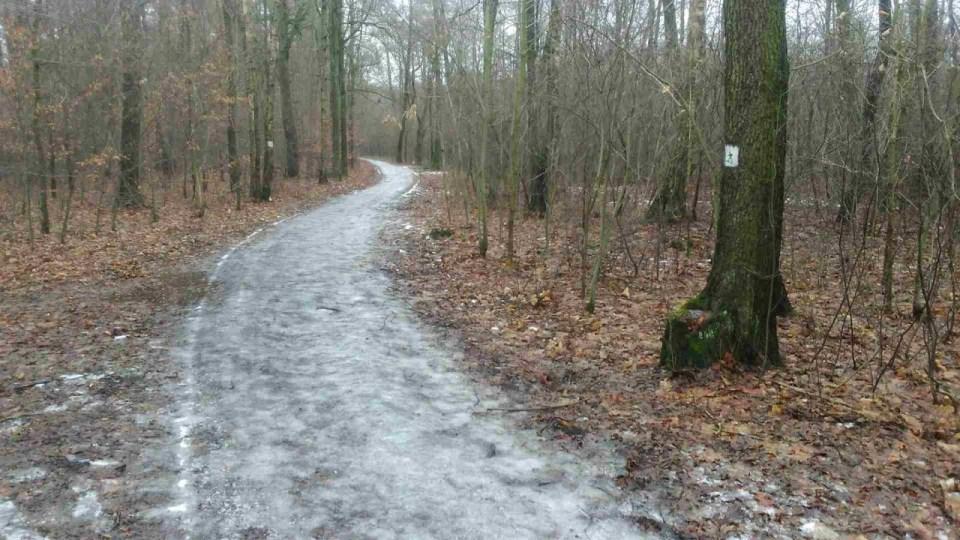 bieganie po lodzie, leśne ścieżki biegowe pokryte warstwą lodu, zima w lesie
