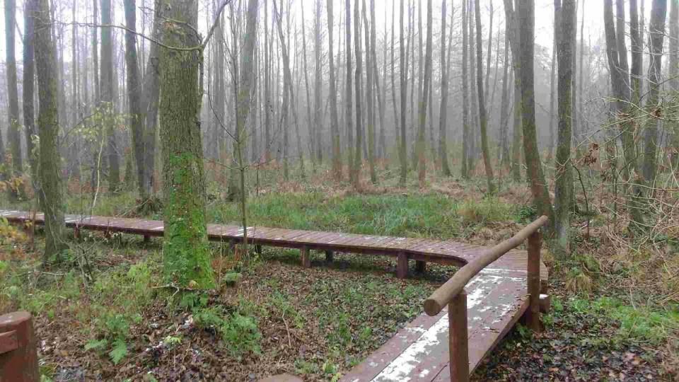 drewniana kładka wśród drzew, uroczysko lublinek w łodzi, świetne miejsce na powrót do biegania
