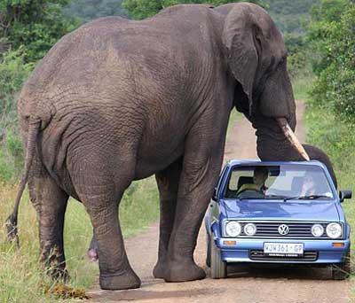 elephant car