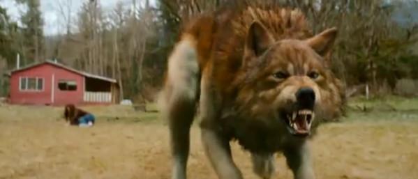 Jacob werewolf by BlaskCiemnosci