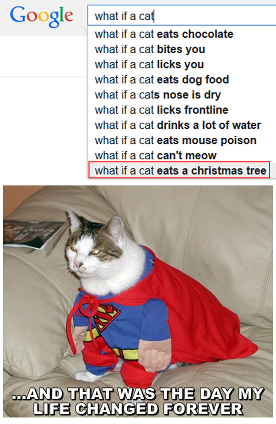 what if a cat eats a christmas tree