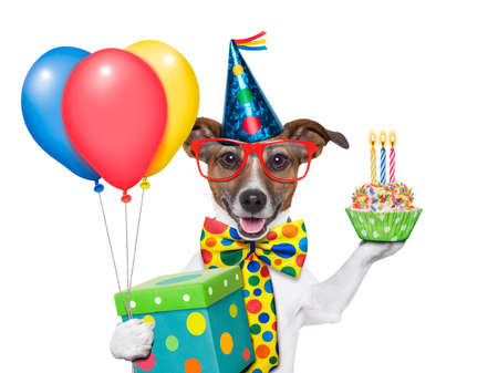 birthday dog with balloons and a cupcake Stock Photo - 20481443