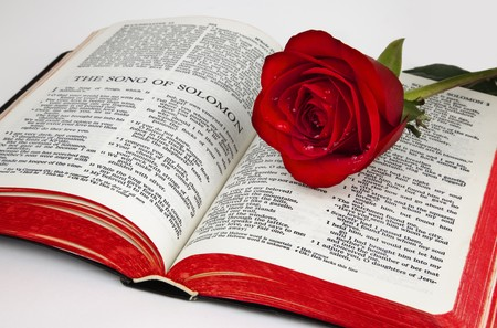 holy bible: A single red rose rests upon the pages of an old bible open to the romantic chapter,  Stock Photo