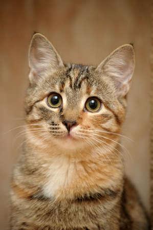 Domestic cat Stock Photo - 17670566