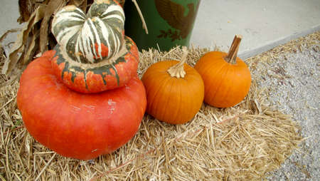 Orange Sugar Pie Pumkins and Red Orange Turban Squash on a Haybale